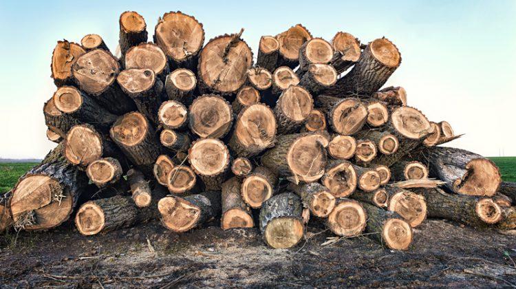 Big pile of logs lying in a field